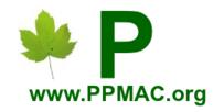 Portal Medicinais - Aromáticas - Condimentares - Alimentícia Não Convencional (PANC) - Funcionais